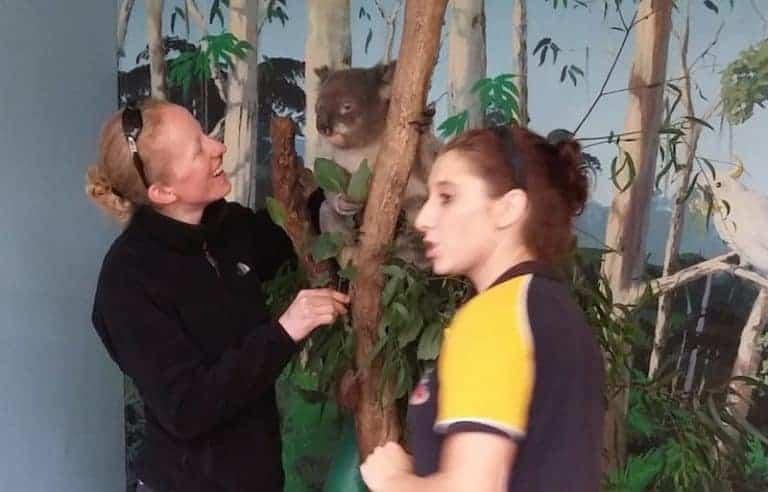 koala photo shoot maru park