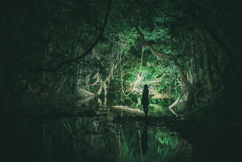 night walk cape tribulation