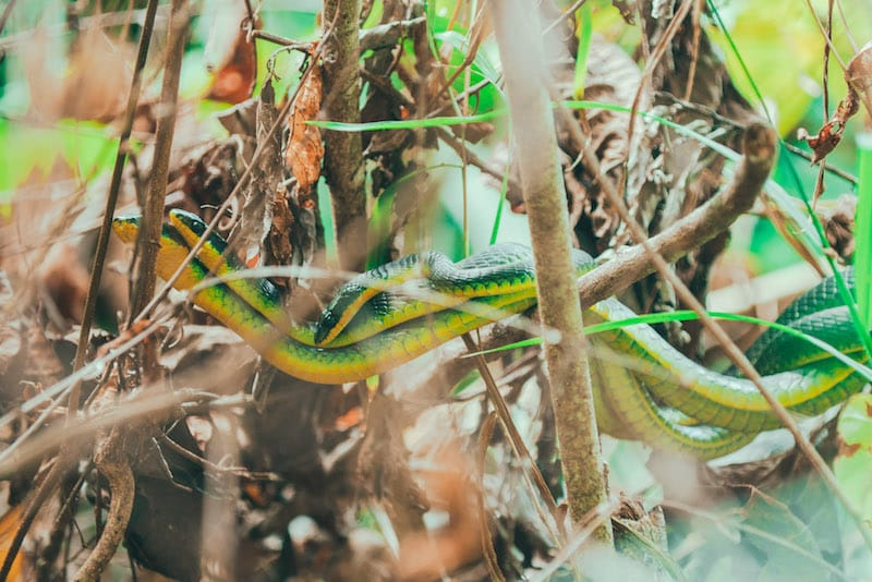 snakes in the rainforest