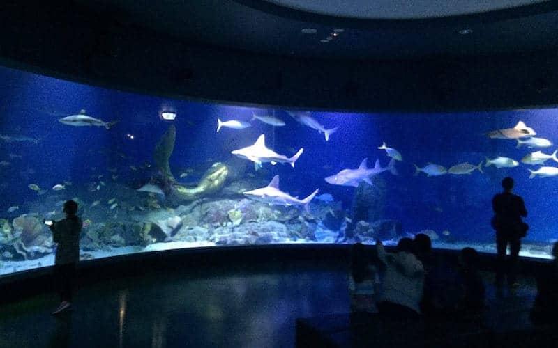 sealife melbourne aquarium rainy activities melbourne