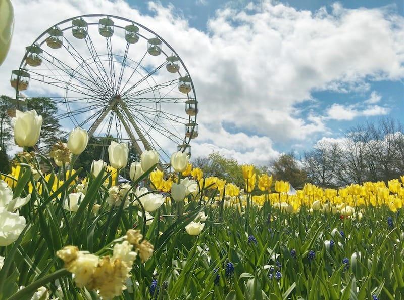 visit canberra in spring