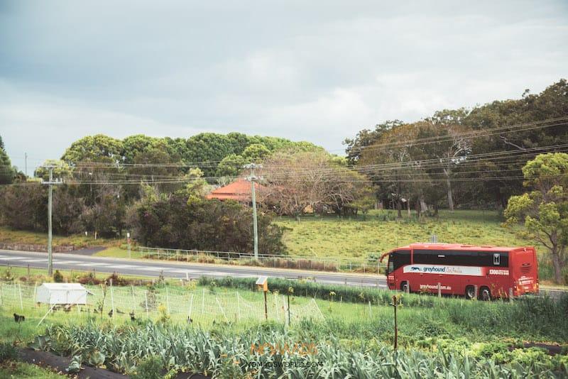 australia traveling options - greyhound bus