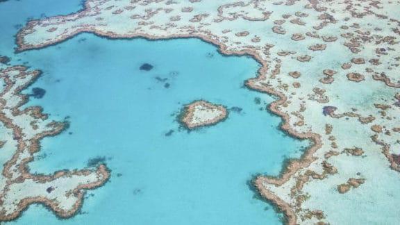 cairns great barrier reef - heart reef
