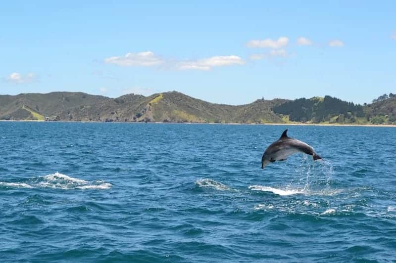 dolphin bay of islands