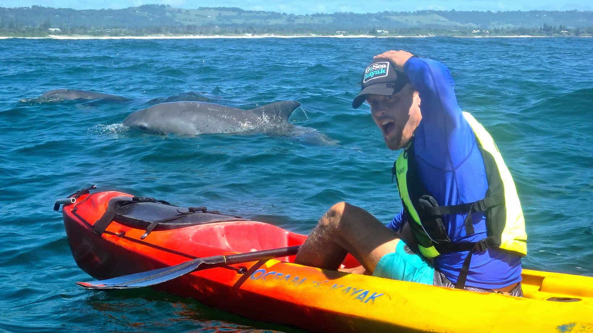 kayak with bottlenose dolphin