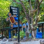 safari lodge accommodation cape tribulation