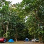cape tribulation campsite