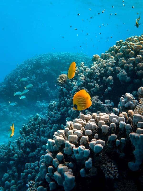 scuba diving spots australia